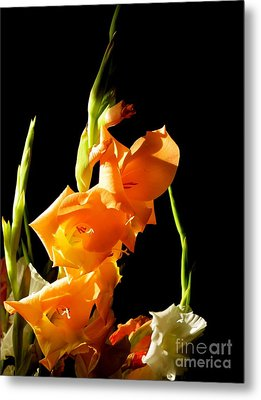 Metal Print featuring the photograph Sorry by Paul Foutz