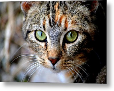 Metal Print featuring the photograph Soul Cat by Deena Stoddard