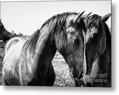 Soul Mates Metal Print by Toni Hopper
