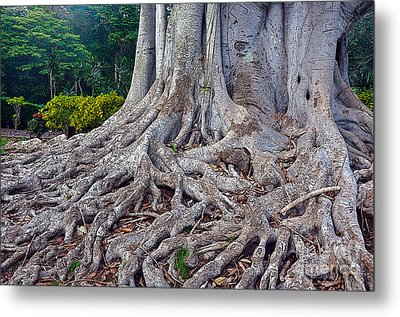 Metal Print featuring the photograph Soul Roots by Gina Savage
