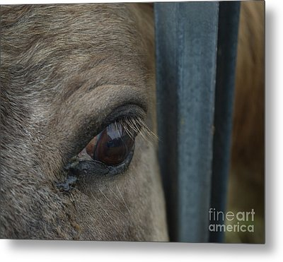 Soul Searching Eyes Metal Print