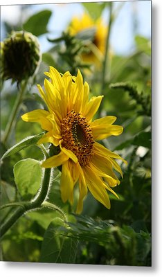 Metal Print featuring the photograph Soulshine No.2 by Neal Eslinger