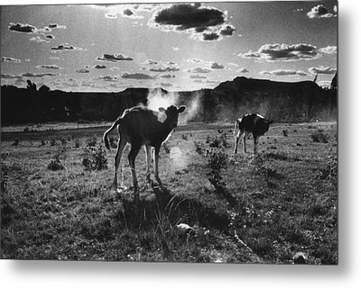South Africa 1993 Metal Print by Rolf Ashby