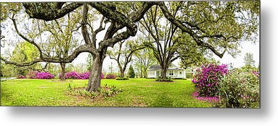 Southern Comfort Metal Print by Bonnie Barry