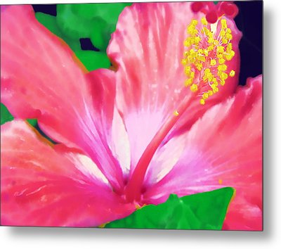 Metal Print featuring the photograph Southern Hibiscus by Diane Miller