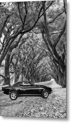 Southern Muscle Metal Print by Steve Harrington