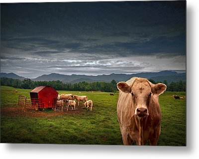Southern Steer Metal Print by William Schmid