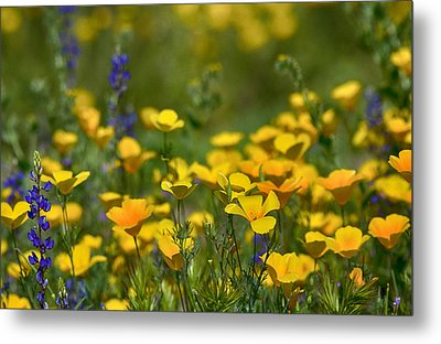 Southwest Wildflowers  Metal Print by Saija  Lehtonen