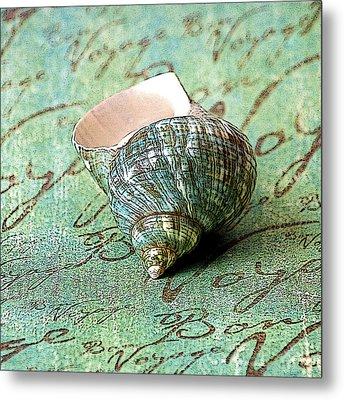 Souvenir Shell Metal Print by Karen Stephenson