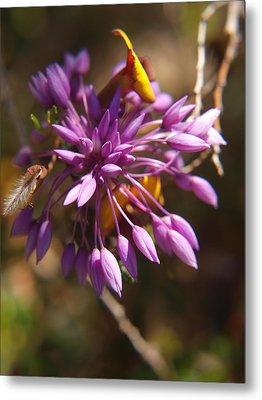 Sowerbaea Laxiflora Metal Print by Michaela Perryman