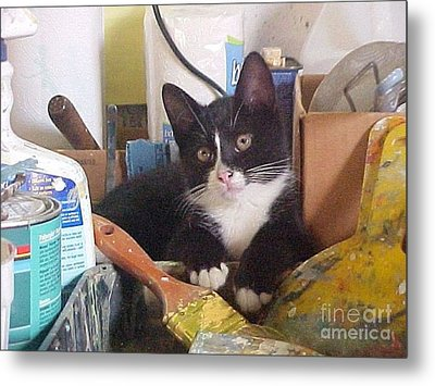 Sox The Kitty Artist Metal Print by Robert Stagemyer