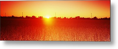 Soybean Field At Sunset, Wood County Metal Print by Panoramic Images