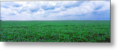 Soybean Field, Coles, Philo, Urbana Metal Print by Panoramic Images