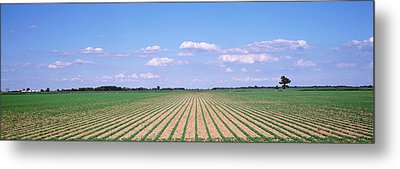 Soybean Field In A Landscape, Marion Metal Print by Panoramic Images