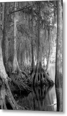 Spanish Moss And Pond Cypress. Shingle Creek. Metal Print by Chris  Kusik