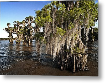 Metal Print featuring the photograph Spanish Moss by Andy Crawford
