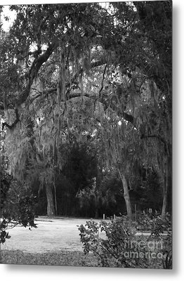 Spanish Moss Of St.augustine Metal Print