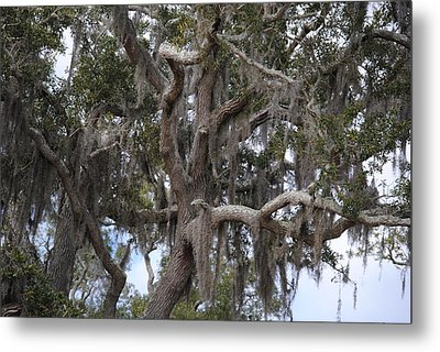 Spanish Moss On Live Oaks Metal Print by Michele Kaiser