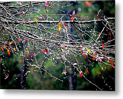 Sparkle Metal Print by Beverly Hammond