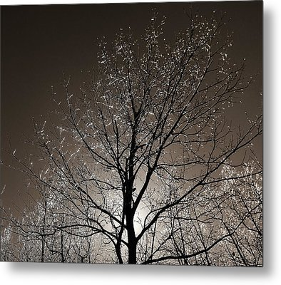 Metal Print featuring the photograph Sparkling Branches by Kathi Mirto