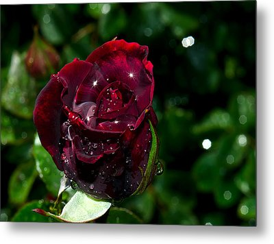 Sparkling Red Rose Metal Print by Camille Lopez