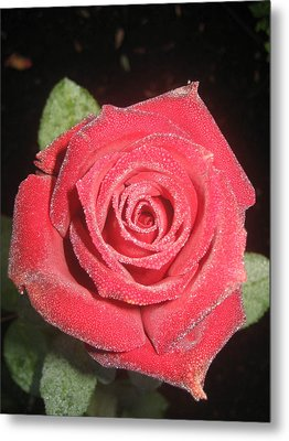 Sparkling Red Rose Metal Print by Celeste Tyree
