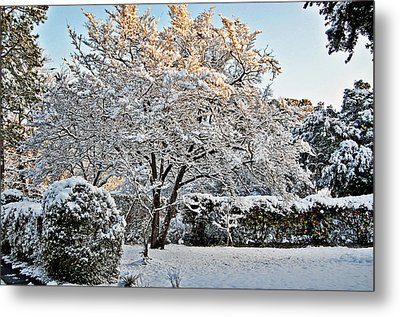 Sparkling Tree Metal Print by Linda Brown