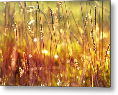 Sparkling Wet Grass In The Sunlight Metal Print by Anne Macdonald
