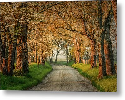 Metal Print featuring the photograph Sparks Lane by Jay Stockhaus