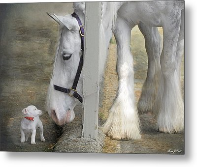 Sparky And Sterling Silvia Metal Print by Fran J Scott
