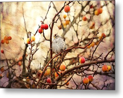 Sparrow In A Crab Apple Tree Metal Print by Peggy Collins