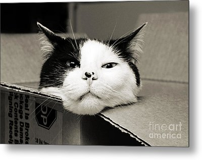 Special Delivery It's Pepper The Cat  Metal Print by Andee Design