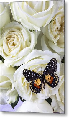 Speckled Butterfly On White Rose Metal Print by Garry Gay