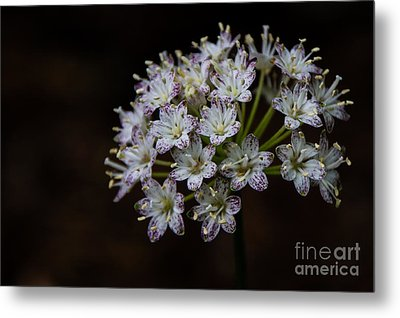Speckled Wood Lily Metal Print