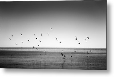 Spectacle Of Flight Metal Print
