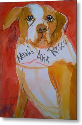 Spencer The Pit Bull Metal Print by Gertrude Palmer