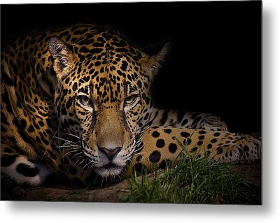 Spender Metal Print by Cheri McEachin