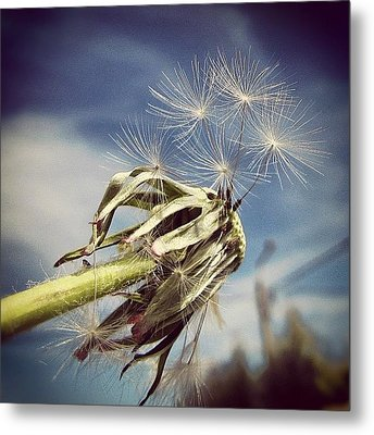 Spent Wishes... Metal Print by Marianna Mills