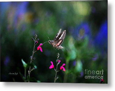 Metal Print featuring the photograph Sphinx Moth And Summer Flowers by Karen Slagle