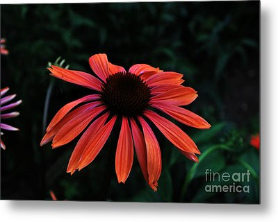 Metal Print featuring the photograph Spicy by Judy Wolinsky