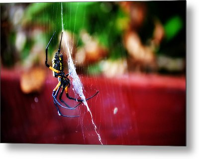 Spider And Web Metal Print by Adam LeCroy