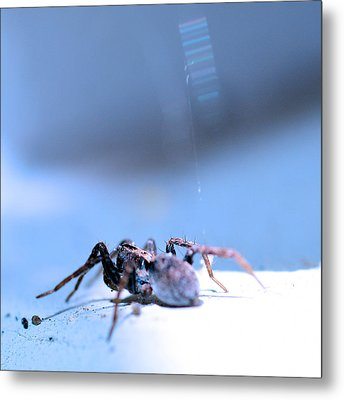 Spider In Blue Tone Metal Print by Tommytechno Sweden