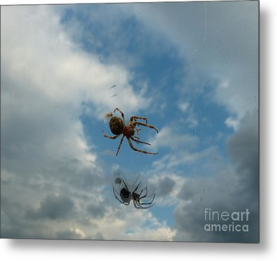 Spider Metal Print by Jane Ford