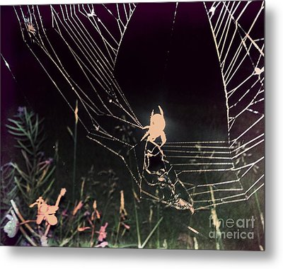 Spider Metal Print by Jennifer Kimberly