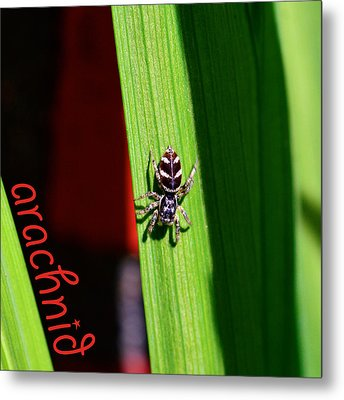 Spider On Green Leaf Metal Print by Tommytechno Sweden