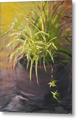Spider Plant Metal Print by Sherry Robinson
