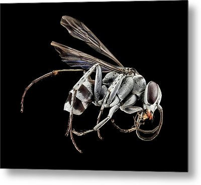 Spider Wasp Metal Print by Us Geological Survey
