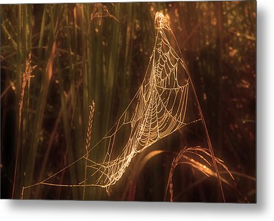Spider Web A Metal Print by Jim Vance