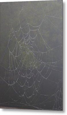 Spiderweb Metal Print by Allan Morrison