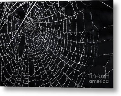Spiderweb With Dew Metal Print by Elena Elisseeva